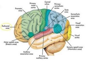 """""""otak kita'"""